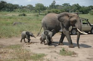 Elefantenfamilie nach dem Bad
