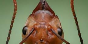 Die Ameisenprinzessin.